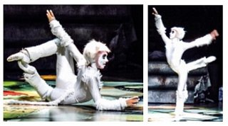 EXCITING 'CATS' WORKSHOP COMING SOON!